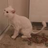 kedi köpek besleyen tipler