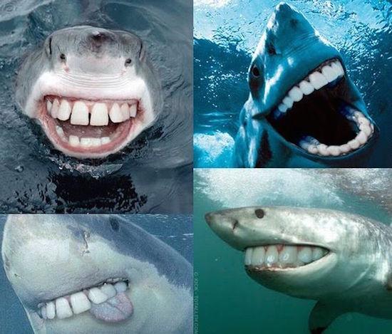 большая белая акула ловля