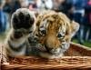 en sevimli hayvan türleri