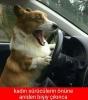 kadın sürücüler