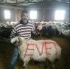 koyunların referanduma evet demesi