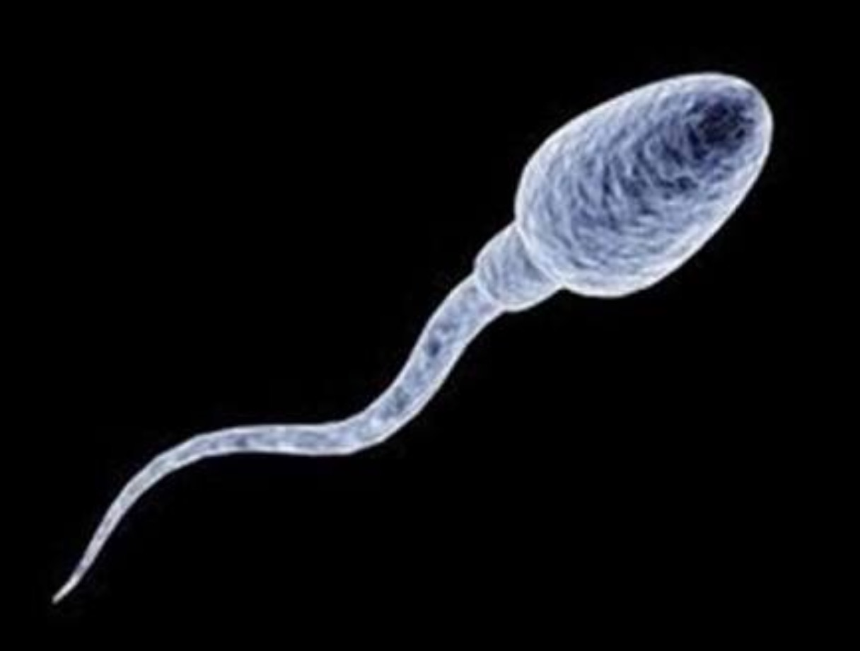 mnogo-leykotsitov-v-sperme