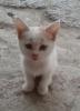 yazarların çektiği kedi fotoğrafları