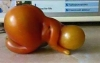 namaz kılan domates