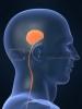 şeriatçı beyni