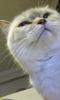 trip yapan kedi modeli