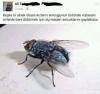 keşke bi sinek olsam