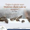 islam hoşgörü dinidir