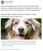 almanya da köpek besleyenlerden vergi alınması
