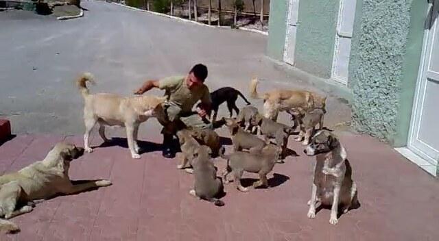 türk askerinin hayvan sevgisi