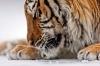 kedi dışında paylaşılacak şirin hayvan veritabanı