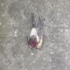 kapının önünde kafası kopmuş kuşla karşılaşmak