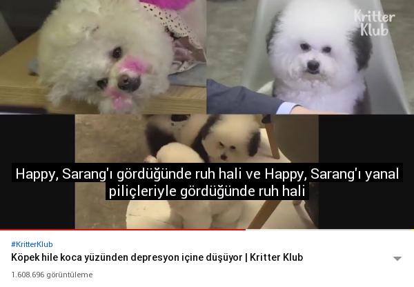 aldatılan köpeğin depresyona girmesi