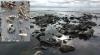 van gölü nün kıyısına kemiklerin vurması