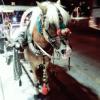 atları bağlayın geceyi burada geçiriyoruz