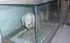 atatürk ü ısıran köpeğin mumyalanması