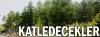 ısparta da kesilecek olan 30 bin ağaç
