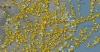 wuhan şehri anlık hava trafiği