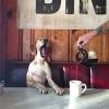 kahve içmeden kendine gelememek
