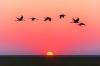 güneş ufukta kaybolurken uçan kuşlar