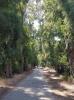 gökova marmaris arasındaki ağaçlı yol