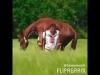 atıyla birlikte barfiks çeken padişah