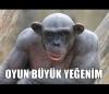 endonezyada fahişeliğe zorlanan orangutanlar