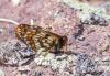 12 bin yaşında olan kelebek