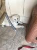 evde köpek beslemek