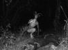 gece ormanda birisi tarafından takip edilmek