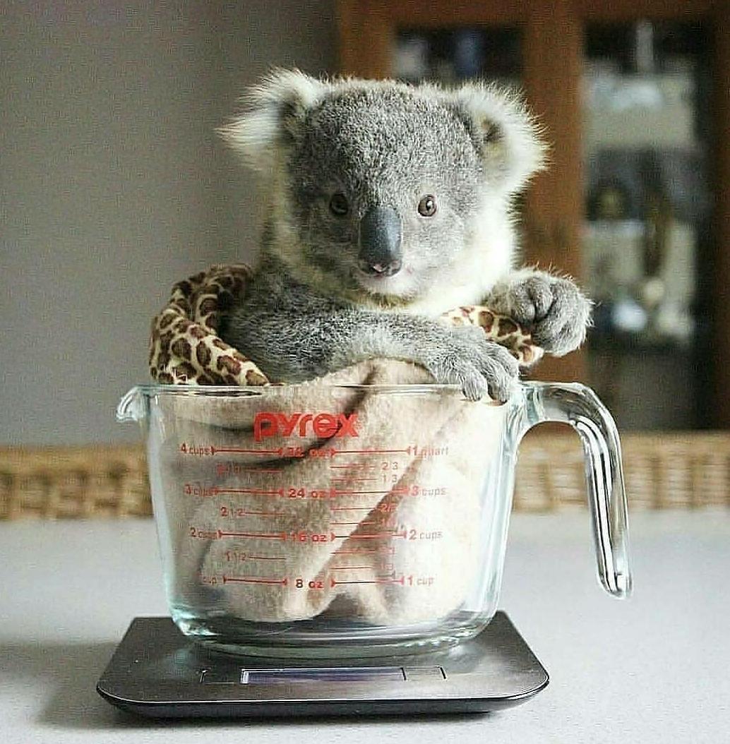 koalafornia