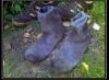 sözlük erkeklerinin çorapları
