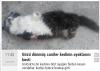 dört ayağı kesilerek öldürülen kedi