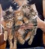 kedilerinbabasi