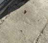 hamamböceğinden korkan erkek