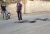 evine gidilen kızın yılan beslediğini öğrenmek