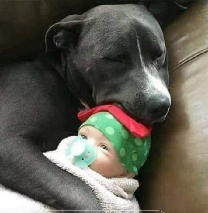 köpek vs insan