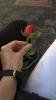 yazarların sevdiği çiçek türleri
