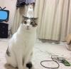 kedi dili ve edebiyatı anabilim dalı