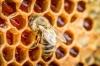 arı sıçar bal olur insan sıçar bok olur