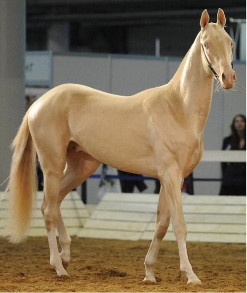 atların estetik olarak kadınlardan güzel olması