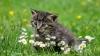 kedi videoları izleyecek gönüllüler aranıyor