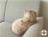 kedileri bir türlü sevememek