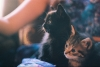 siyah kedi yavrusu