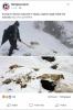 konyada 7 köpeğin ayakları bağlı katledilmesi