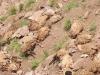 toplu intihar eden koyunlar