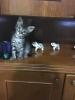 sözlükte kedi fotoğrafı paylaşanlar