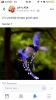 mavi baştankara kuşu