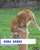 sözlüğe kedi fotoğrafı atan tipler