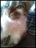 kedilerin yüzündeki hayırdır ne bakıyon ifadesi